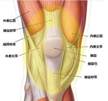 膝周囲の靭帯や筋肉の痛み